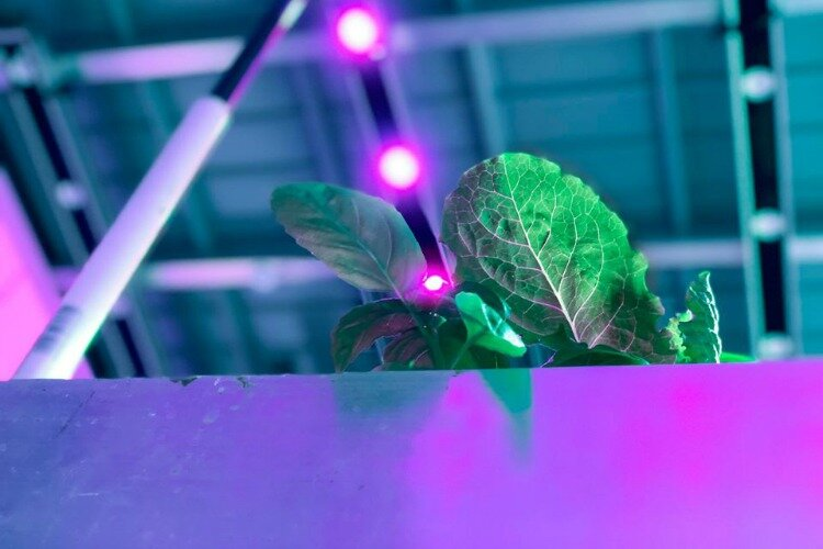 80 Acres farm in St. Bernard is one of the world's first fully automated indoor farms.