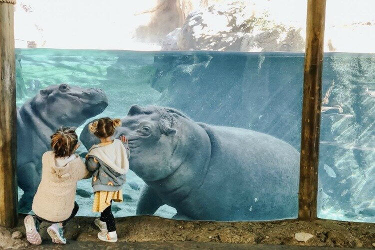 The Cincinnati Zoo is listed as one of the region's many family-friendly attractions.