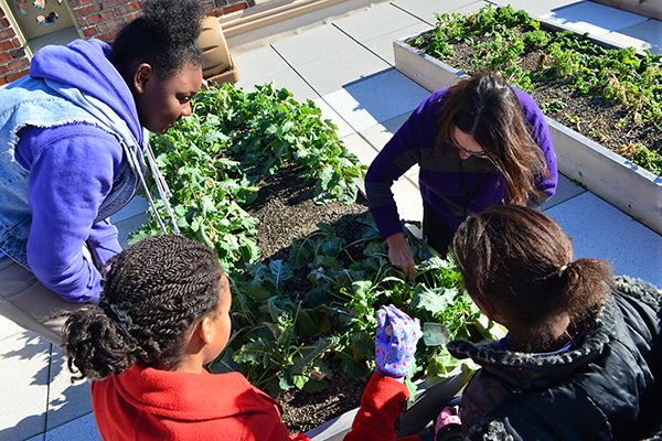 Students tend the rooftop gardens at Rothenberg Academy