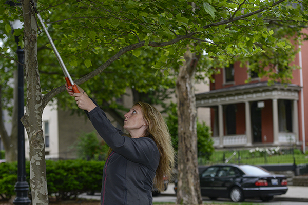 Courtney hand-trims a tree in Covington's Westside neighborhood.