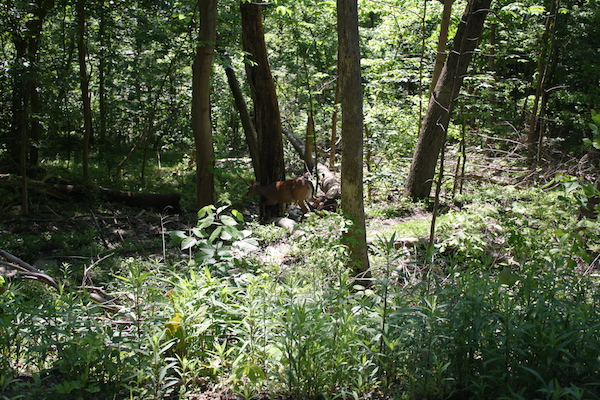 The trails in Tower Park are wooded, making it a great spot to view fauna.