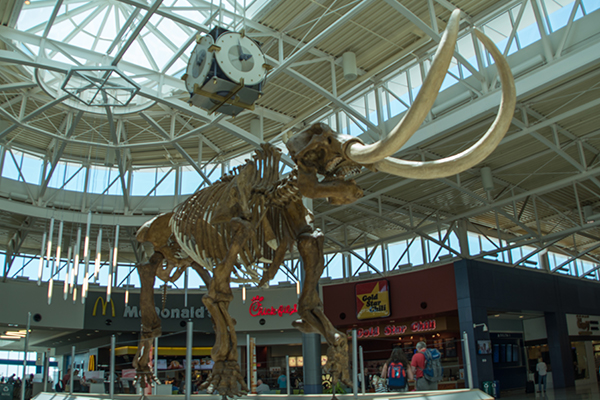 Mastodon skeleton from the Science Museum at Union Terminal currently resides at CVG.
