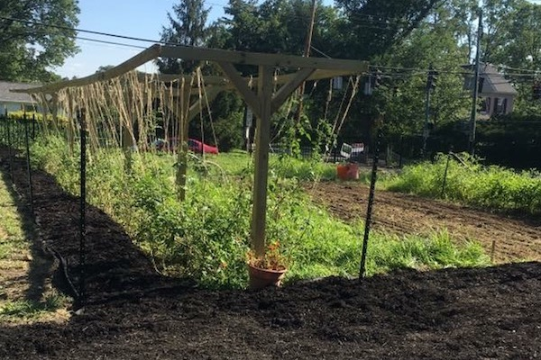A farm plot in Westwood that provides fresh produce to Jubilee Market.