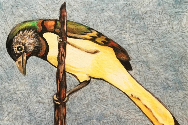 Painting of a bird by Renee Harris