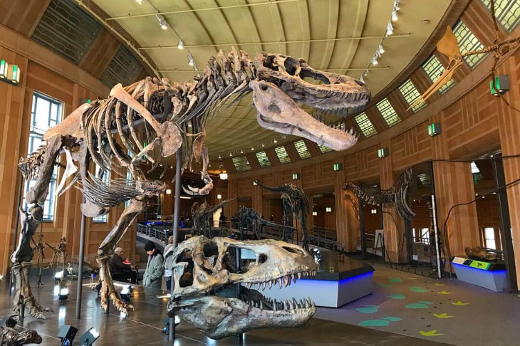 Visitors will be able to view prehistoric creatures up close and through interactive experiences.