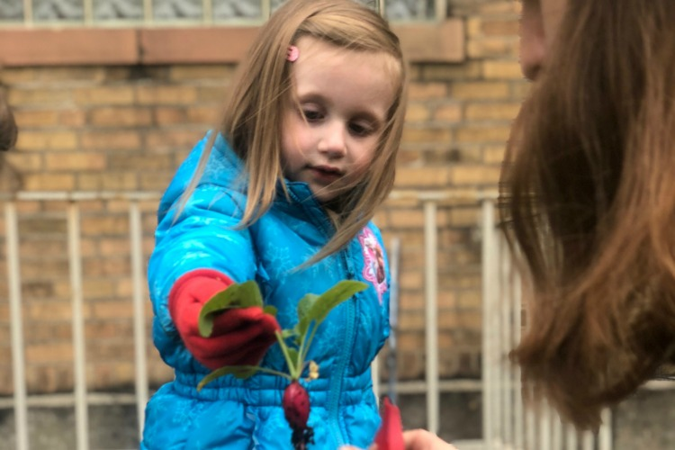 Children plant, pick, and eat what they grow.