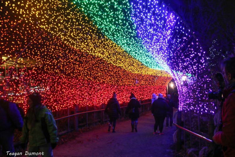 The Festival of Lights runs through Jan. 1.