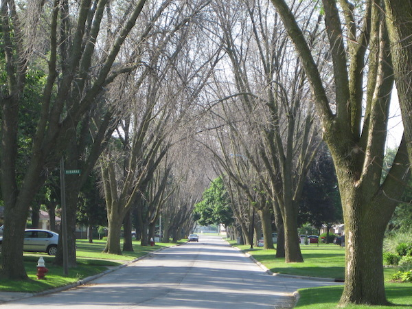 "A still from ""Trees in Trouble"" of dead ash trees along a suburban street."