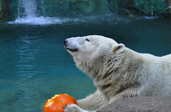 Trick or treat at the Zoo every weekend in October
