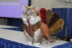 Thanksgiving_cat_turkey_costume_small