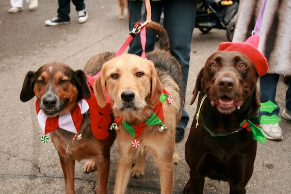 Mt. Adams hosts the annual Reindog Parade Dec. 12
