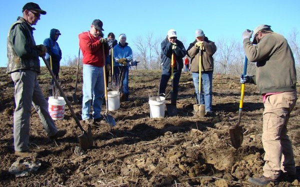 Volunteers dig in to replant trees at last year's Reforest NKY event.