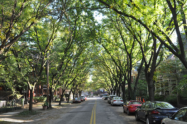 & Speaking for the trees: Campaign aims to avert canopy-loss crisis